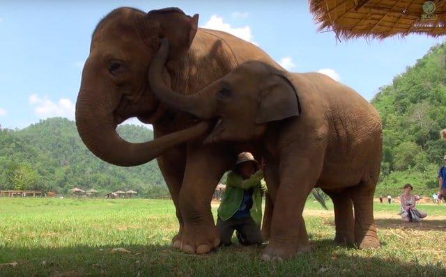 elephant4