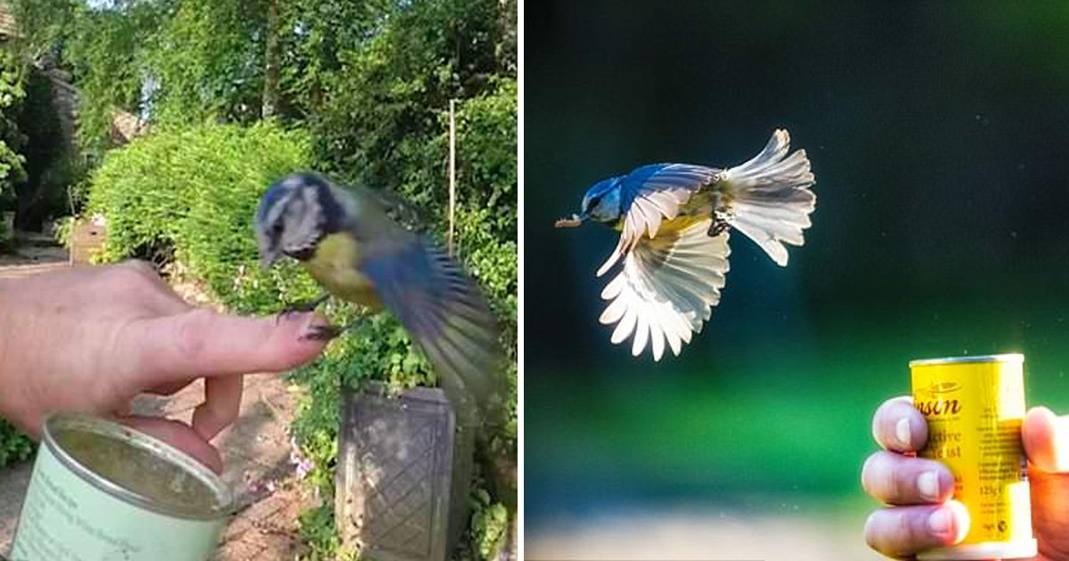 fdasfd.jpg?resize=636,358 - Amazing Footage Shows Beautiful Blue Tit Landing On Man's Arm Going For The Can Of Worms