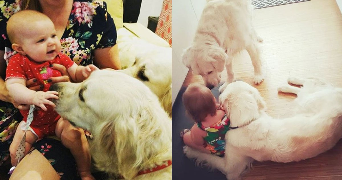 gr.jpg?resize=636,358 - Parents Stunned After Watching Baby-Cam: Dogs Caught Helping The Toddler To Escape From The Room