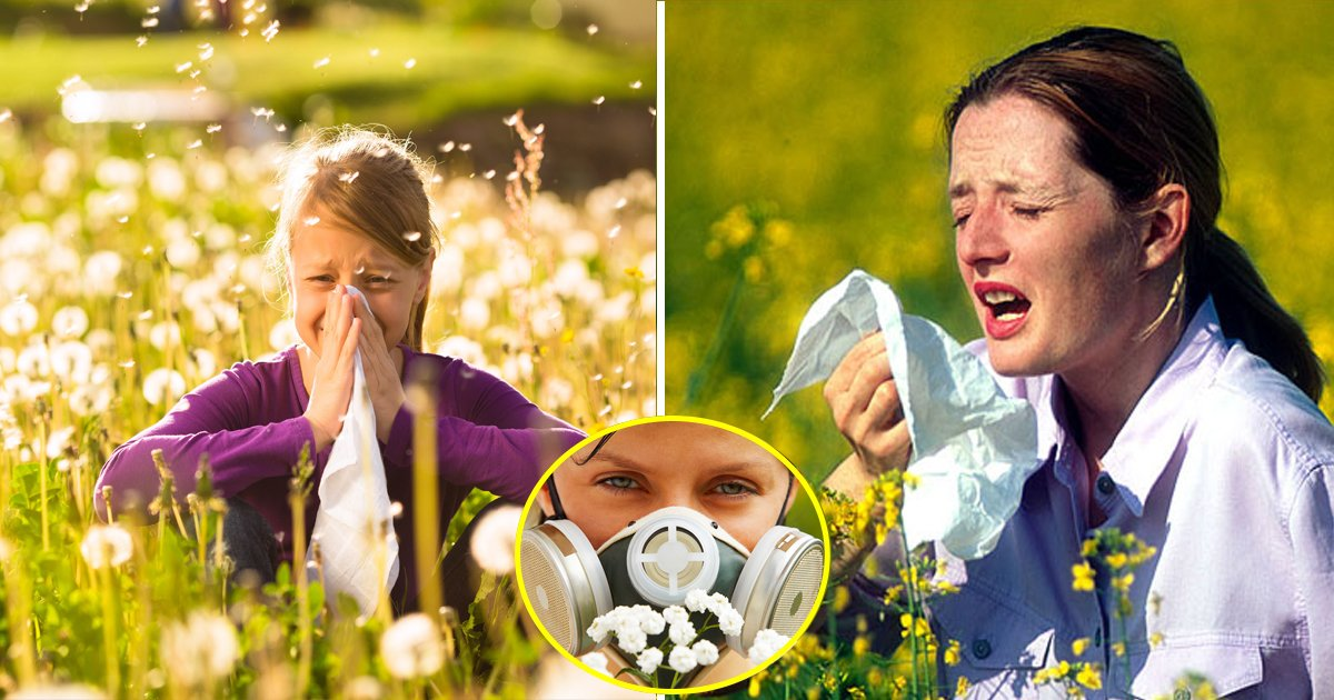 hayfever.jpg?resize=1200,630 - Hayfever Sufferers Are Alarmingly Warned, Levels Of Pollen Are Going To Be The Highest In The Coming Weeks