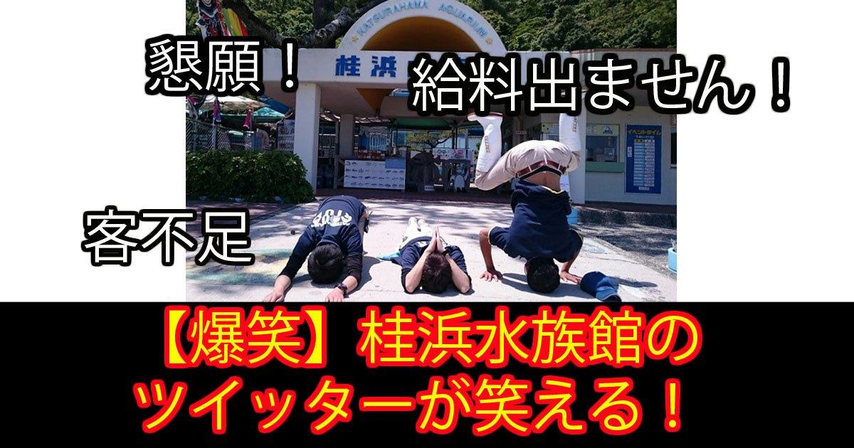 katurahama.jpg?resize=1200,630 - 「このままでは給料がでません!」写真1枚で大逆転した水族館