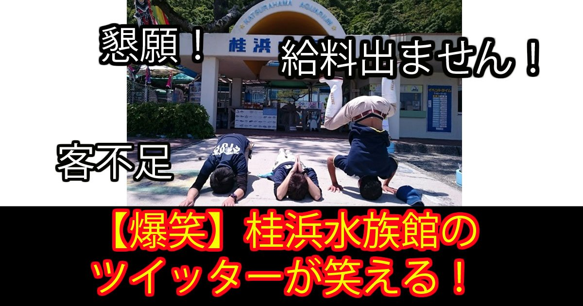 katurahama.jpg?resize=648,365 - 「このままでは給料がでません!」写真1枚で大逆転した水族館