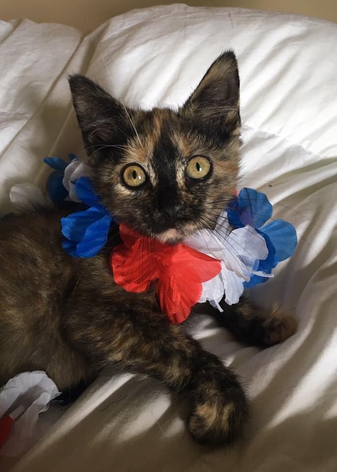 kitten-6