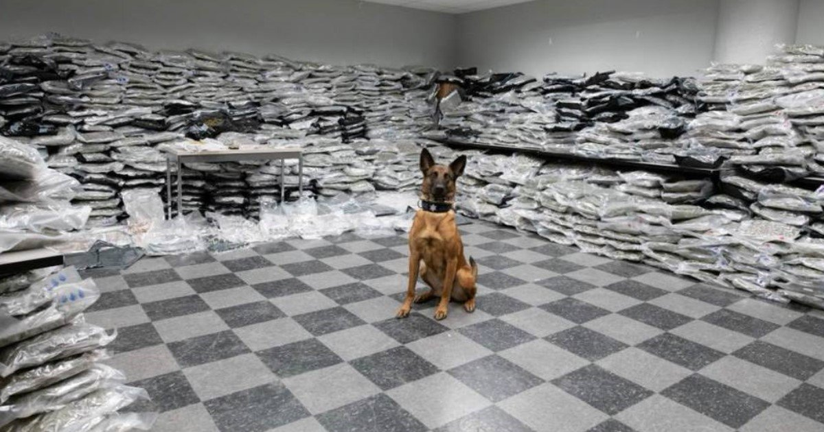 pic copy 2 20.jpg?resize=636,358 - Chicago Police Dog Sniffs Out More Than $10 Million Worth Of Marijuana During A Routine Traffic Stop