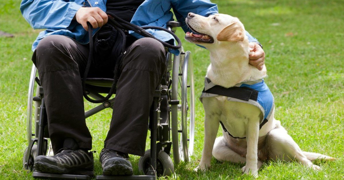 pic copy 23.jpg?resize=636,358 - Here Is What You Should Do If You Are Approached By A Service Dog Without Its Owner