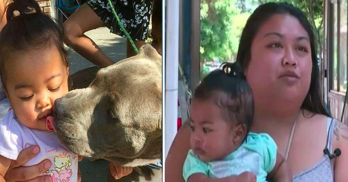 pitbul.jpg?resize=636,358 - Pit Bull Saves Family From House Fire, Pulls 7-Month-Old Girl By Her Diaper