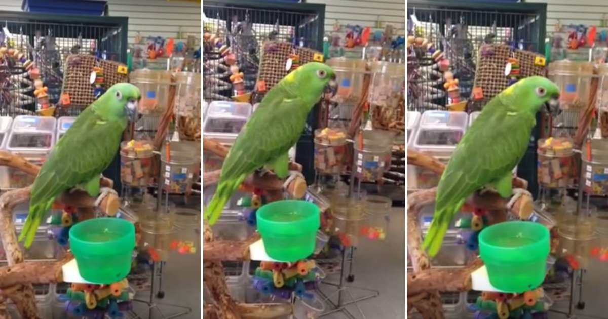 r1 side.jpg?resize=636,358 - The Way This Parrot Sings Her Favorite Verse Of 'Close To You' Will Leave You Amazed