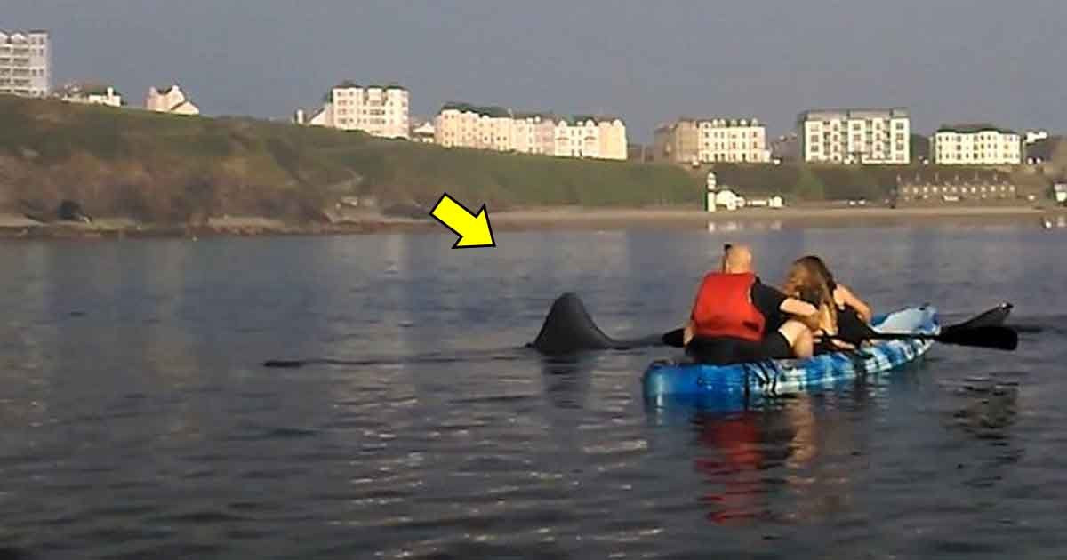 rta.jpg?resize=1200,630 - A Team Of Kayakers Surprised By Large Shark That Swam Past Them Just Off The Coast