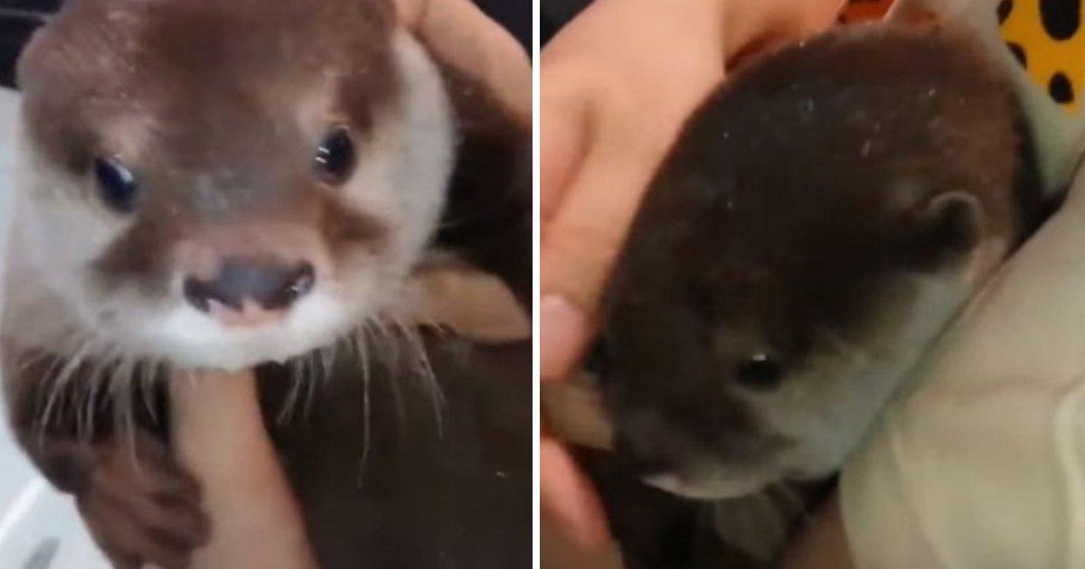 s 57.jpg?resize=412,232 - 태어나서 처음으로 '목욕'을 하는 아기 수달의 '귀여운' 반응 (영상)