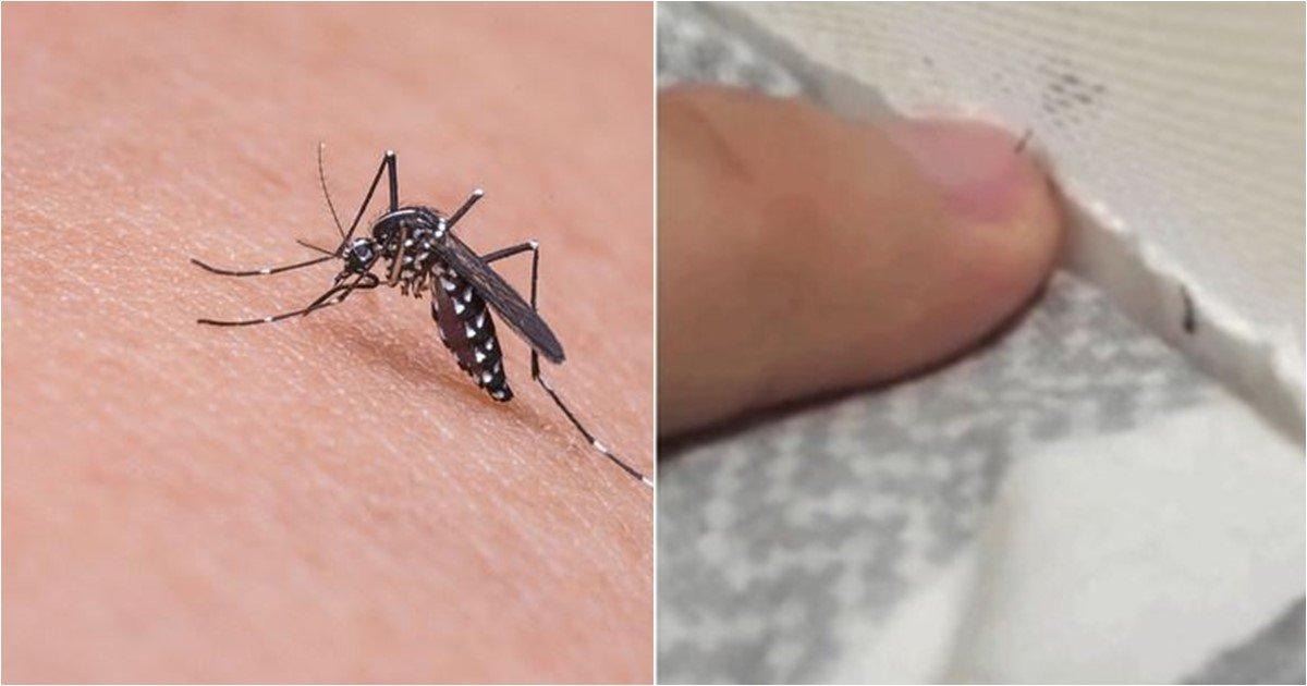 s 75.jpg?resize=300,169 - 온라인서 화제된 사람 피 빨아먹으려는 '모기 능욕' 영상