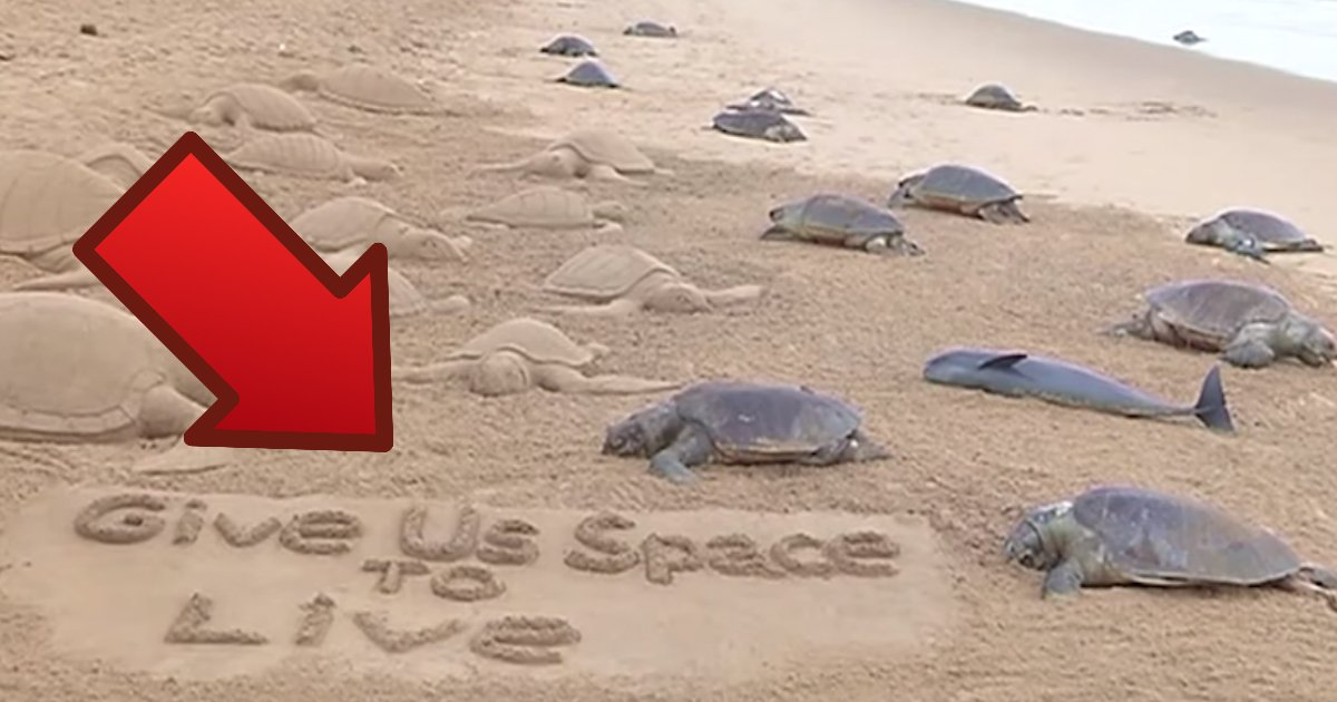 save sea life.jpg?resize=1200,630 - Over 150 Turtles Appear To Be Laying Eggs On A Beach; Closer Inspection Reveals The Dark Truth
