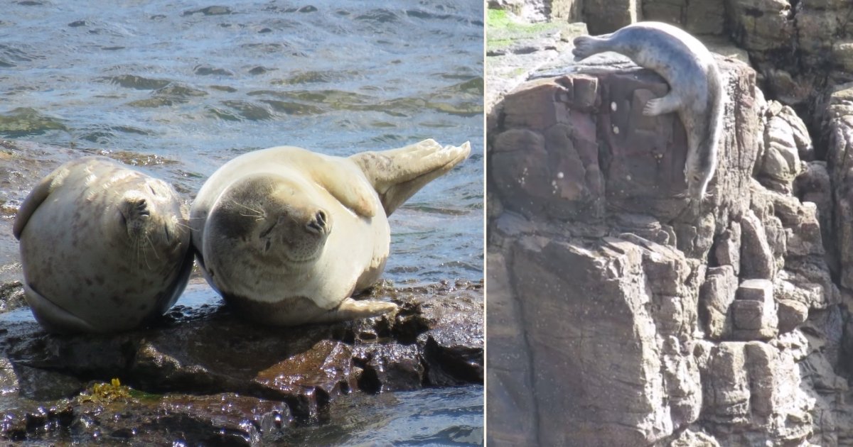 seals.jpg?resize=412,232 - Seals Were Seen Flinging Themselves Off Cliffs To Avoid Humans
