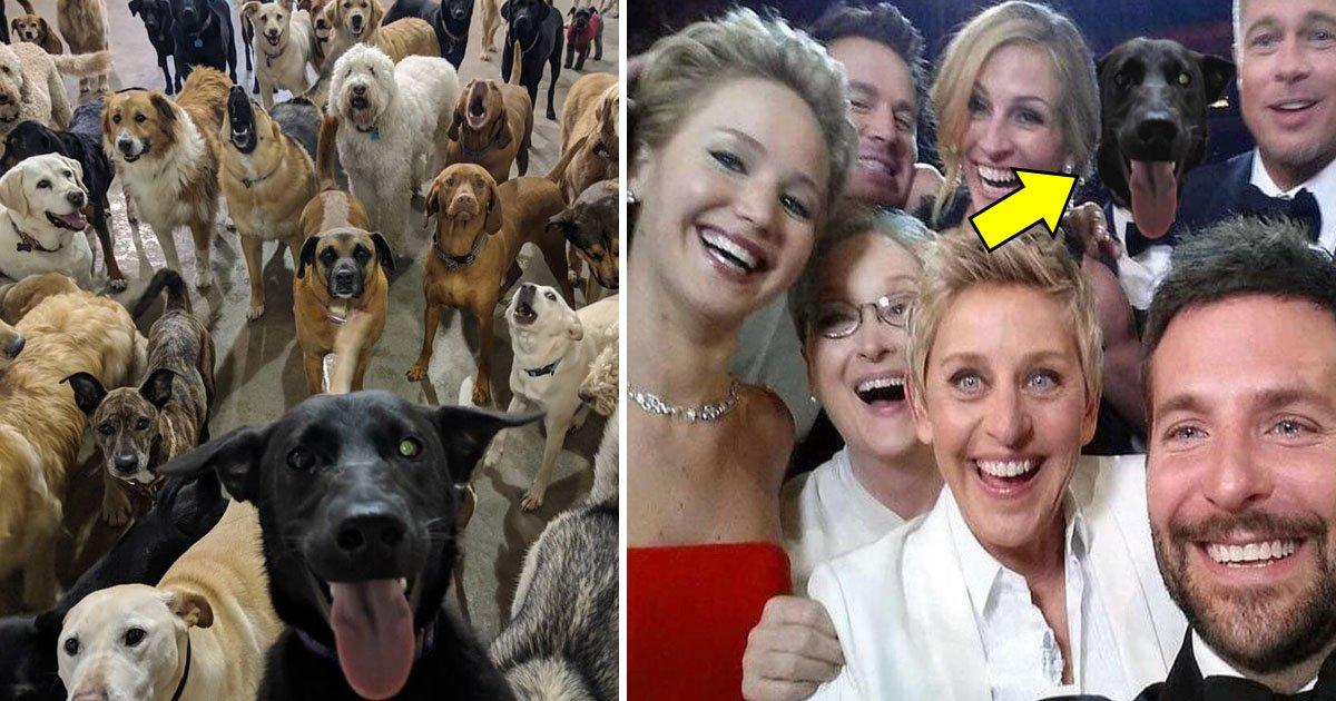 selfie.jpg?resize=412,232 - Un employé d'une garderie pour chien a pris sur une photo des chiens et cette photo rendra votre journée joyeuse