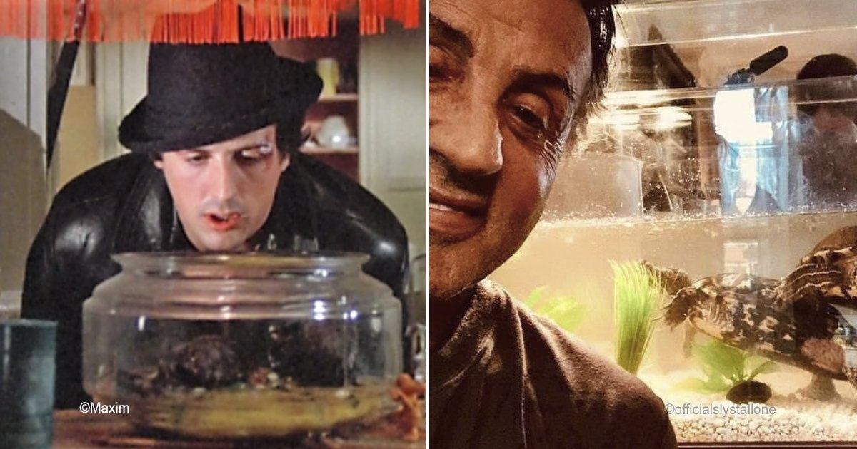 """stalone.jpg?resize=648,365 - Sylvester Stallone conserva dos tortugas de 44 años que aparecieron en el primer """"Rocky"""""""