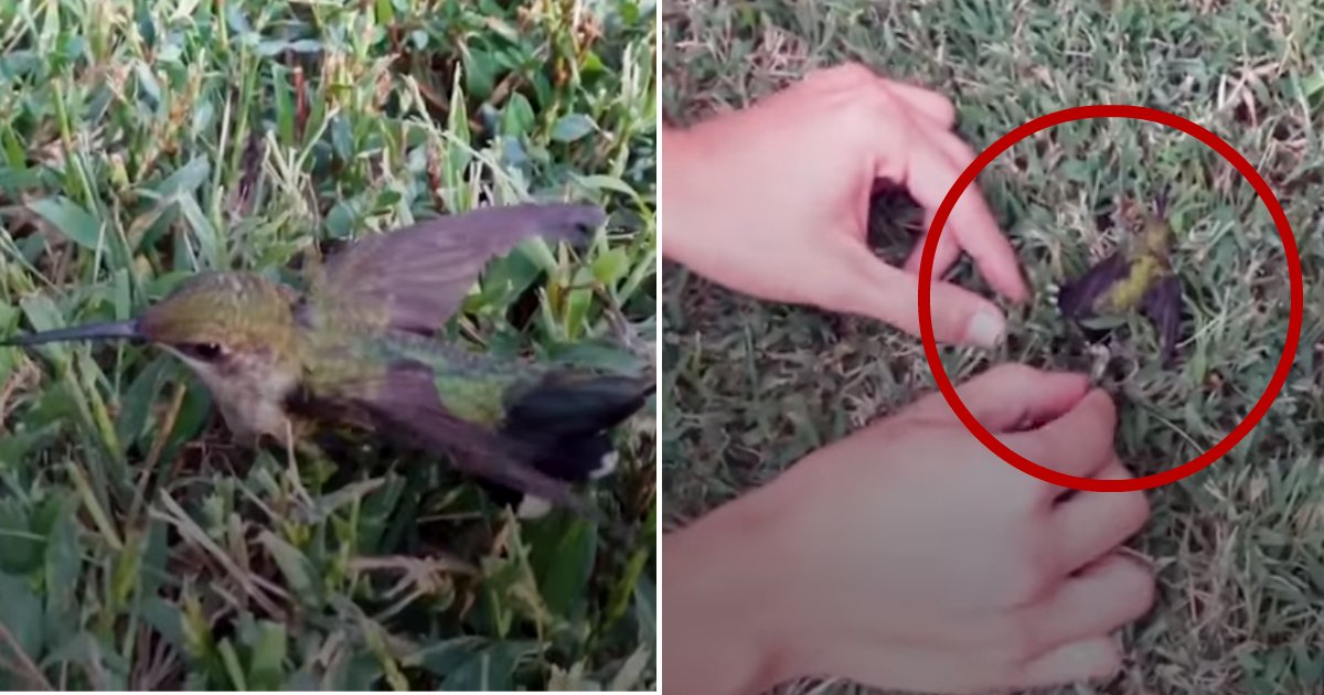 stuck bird.jpg?resize=412,232 - Don't Spit Your Gum On The Ground – This Poor Hummingbird Got Stuck And Cried For Help