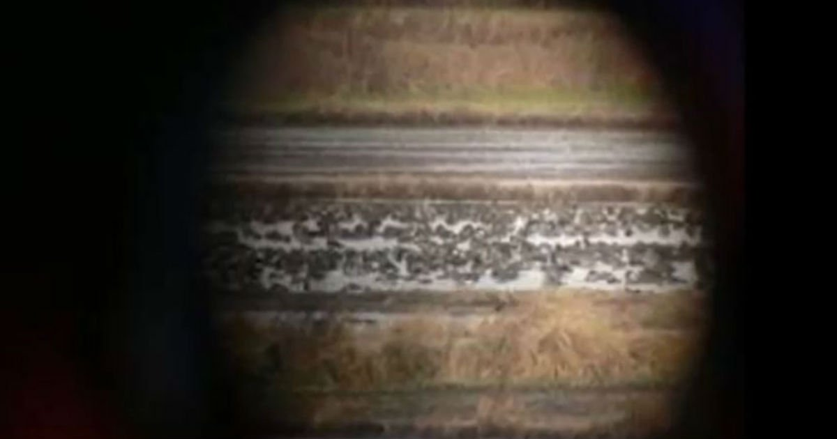 thumb 210.jpg?resize=1200,630 - 누리꾼들이 직접 찍어 '과학계' 뒤흔들 뻔한 행성 사진들 (반전주의)