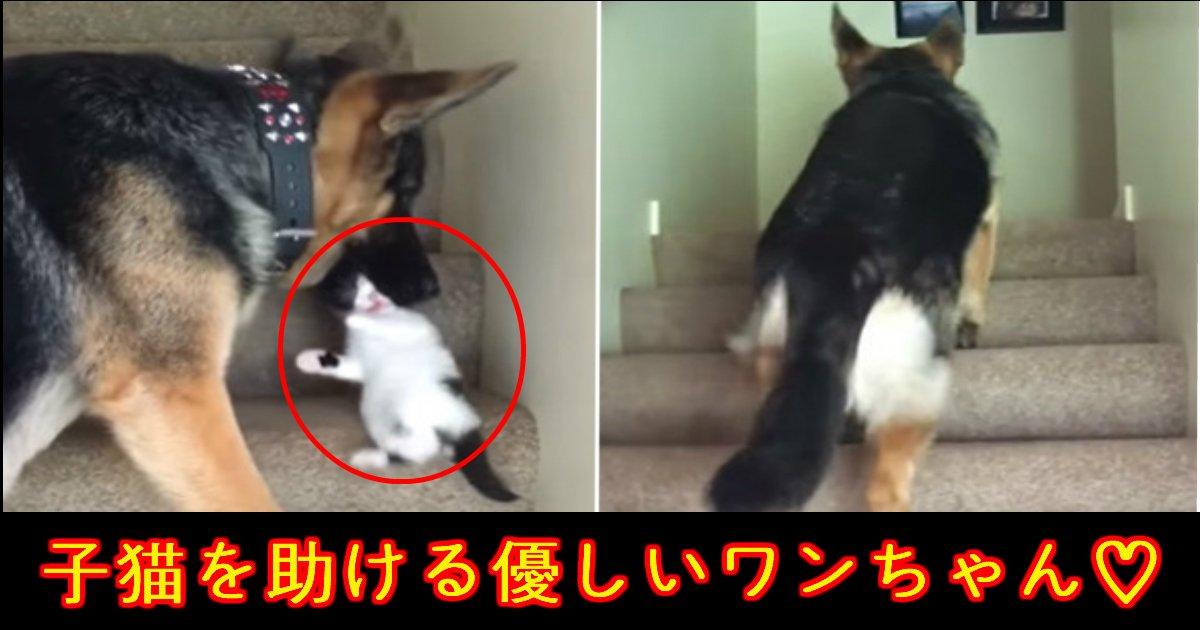 "unnamed file 7.jpg?resize=300,169 - 階段で""子猫ちゃん""を助ける""ワンちゃん""に胸キュン♡"