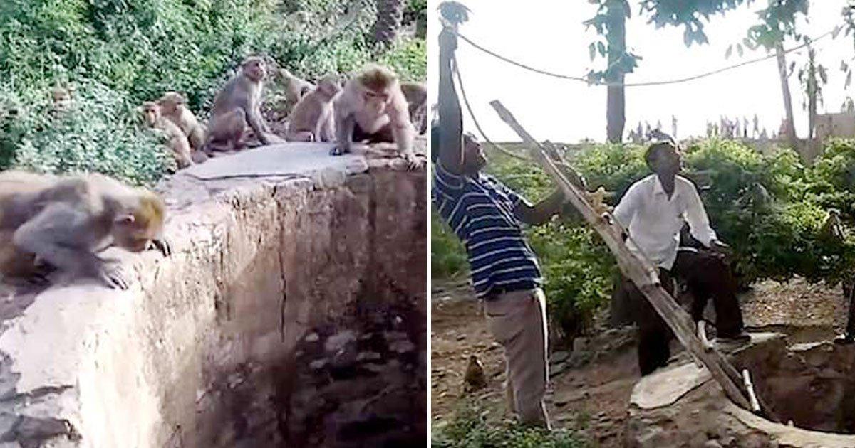 untitled 1 134.jpg?resize=300,169 - Macacos salvam a vida de um leopardo que estava afogando ao alertar os moradores locais