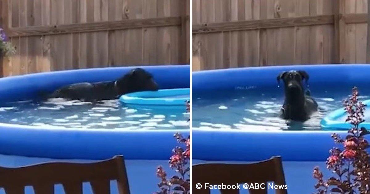 untitled 1 179.jpg?resize=1200,630 - Tenía prohibido nadar en la piscina, su dueño lo descubre infraganti y sale disimulado (video)