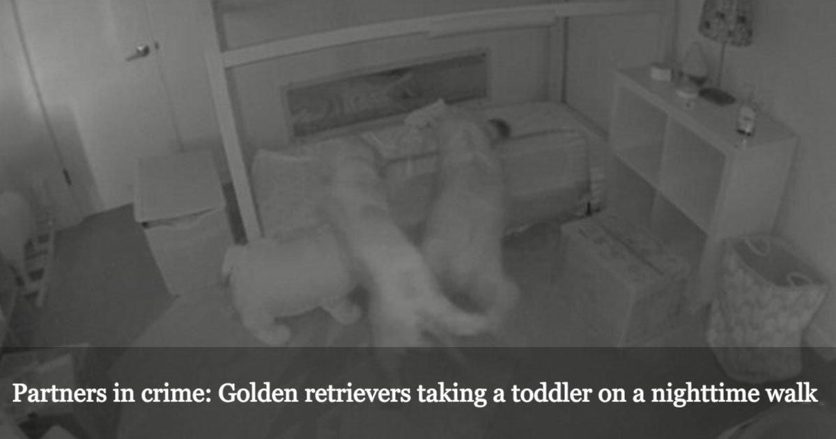 untitled 1 48.jpg?resize=636,358 - Ces parents ont découvert qui étaient les mystérieux complices des balades nocturnes de leur bébé.