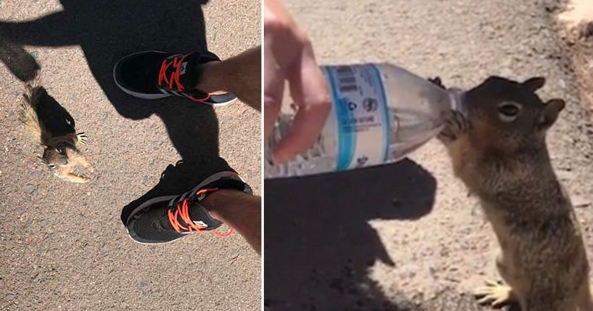 untitled 1 50.jpg?resize=1200,630 - Thirsty Squirrel Gulps Down The Entire Bottle Of Water From A Tourist's Bottle During A Boiling Day At The Grand Canyon
