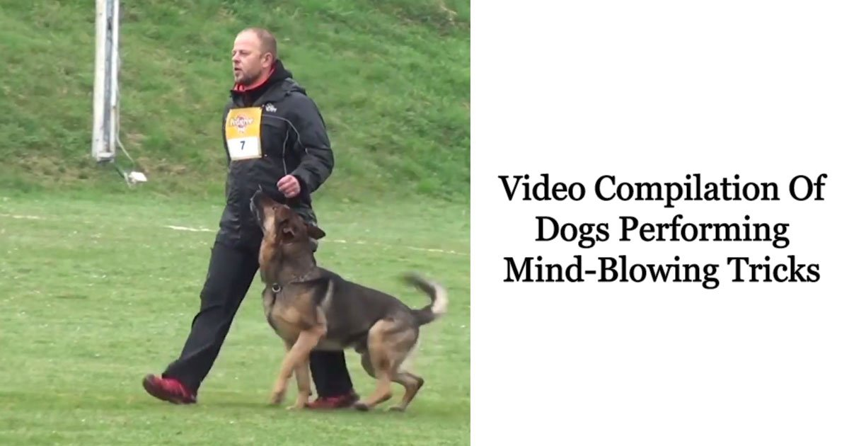 video compilation of dogs performing mind blowing tricks 1.jpg?resize=636,358 - Video Compilation Of Dogs Performing Mind-Blowing Tricks That Will Leave You Tongue-Tied