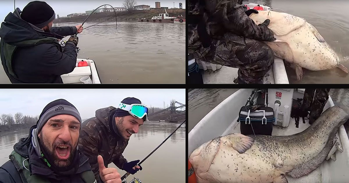 yuri grisendi catfish featured.jpg?resize=1200,630 - Yuri Grisendi a attrapé un poisson monstre dans la rivière Pô près de Mantoue en Italie