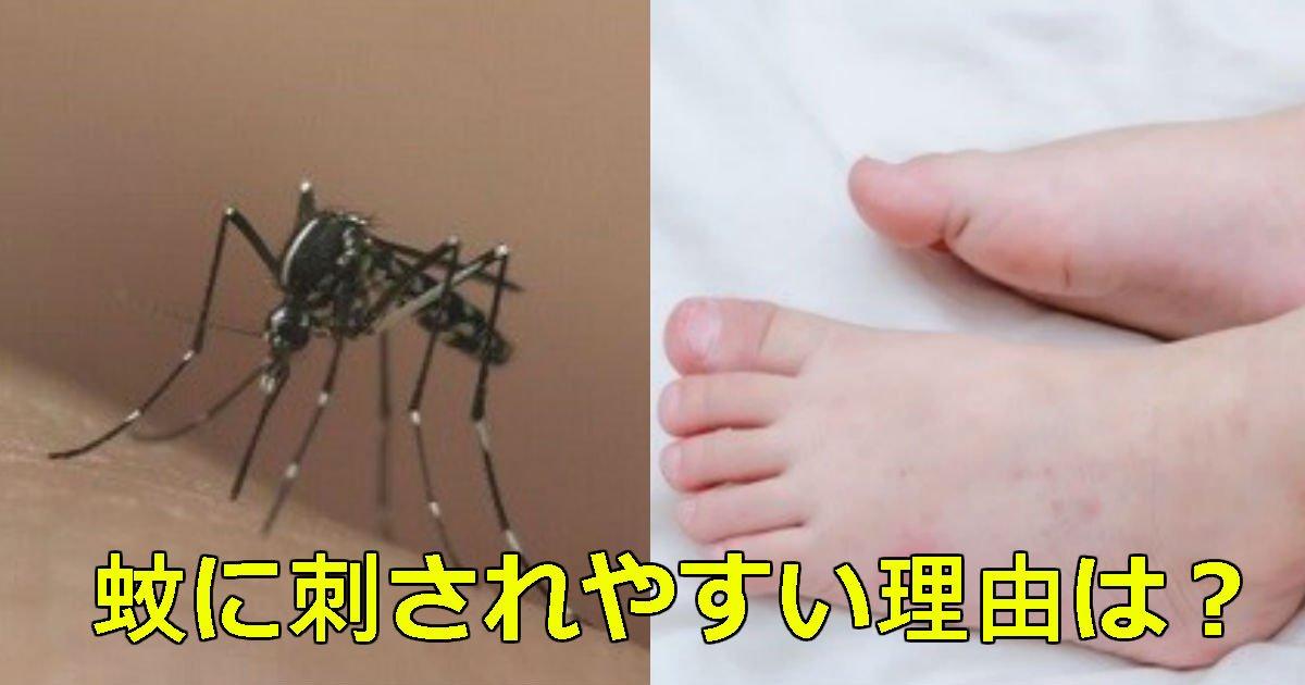 1 127.jpg?resize=1200,630 - 高校生が発見!!蚊に刺されやすい理由が分かった!!!