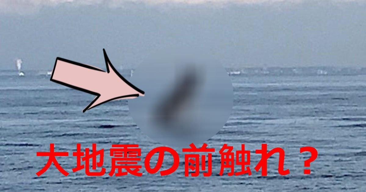 1 27.jpg?resize=300,169 - 【地震の前触れ!?】東京湾に〇〇〇出現!(画像あり)