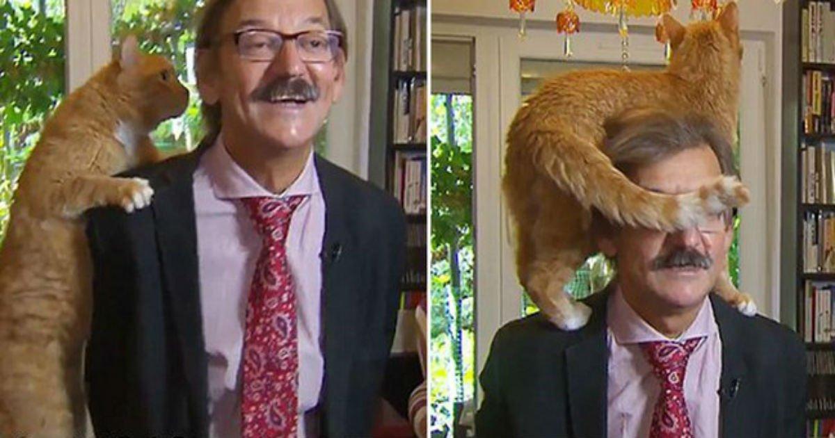 2 77 1.jpg?resize=1200,630 - Gato decide que quer atenção e aparece do nada em entrevista - hilário!