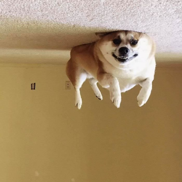 Dog Balloon