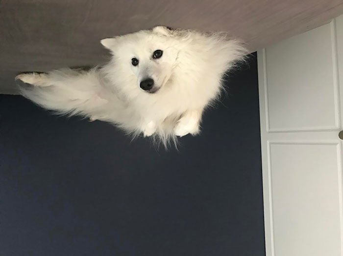 Funny-Dog-Balloons-Ceiling