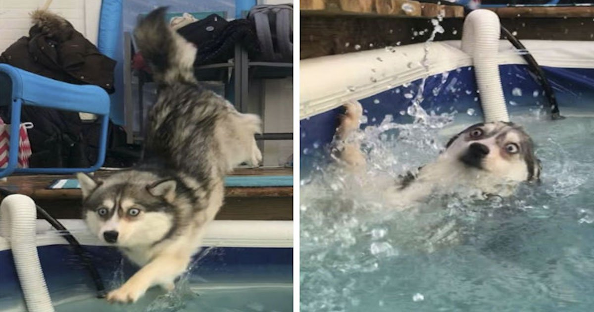 20 hilarious dogs funny idiot dogs 144 5b1a761420b62  605 1.jpg?resize=1200,630 - 20 Hilarious Dogs That Will Make You Laugh