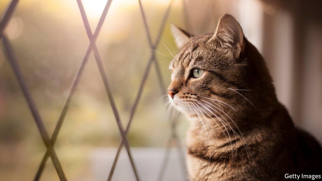 20171216 bkp511 0.jpg?resize=300,169 - Casal acolhe gatinha de rua doente e acaba se beneficiando muito com sua presença