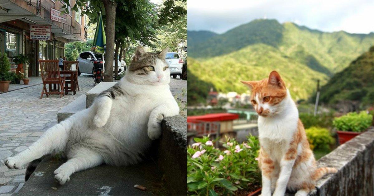"3 1 3.png?resize=1200,630 - ""고양이가 있어 다행이야""... 세계 '고양이' 명소 10"
