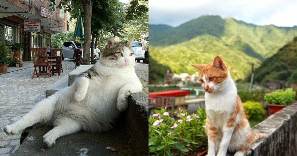 "3 1 3.png?resize=648,365 - ""고양이가 있어 다행이야""... 세계 '고양이' 명소 10"