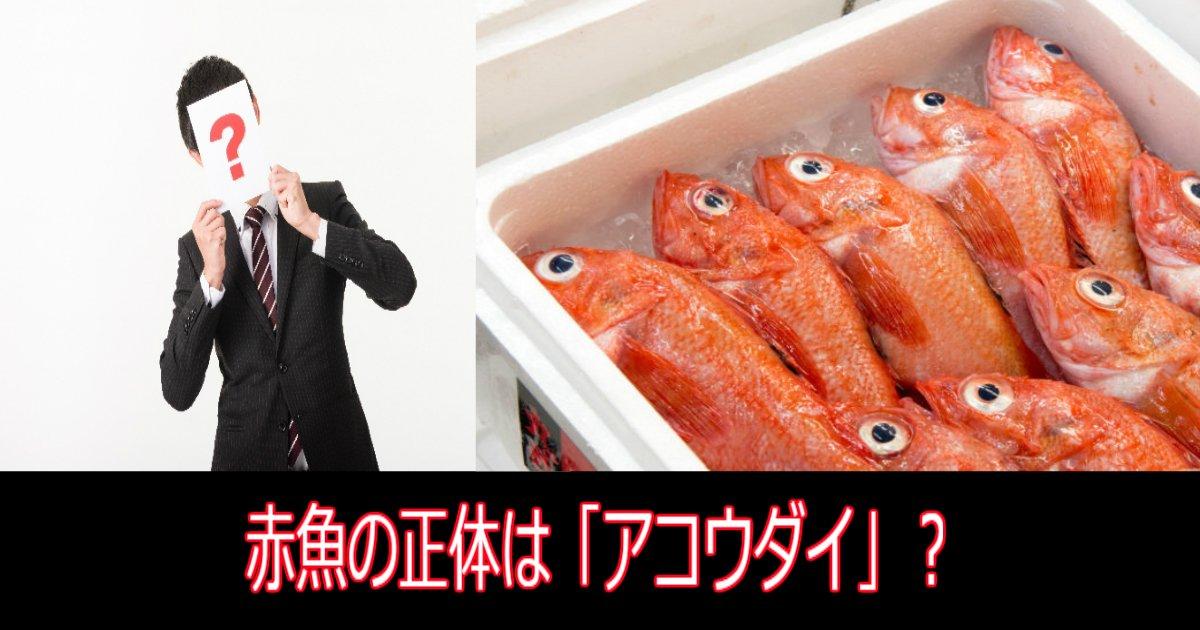3 101.jpg?resize=1200,630 - 【究明】赤魚の正体は「アコウダイ」?旬の時期はいつ頃?