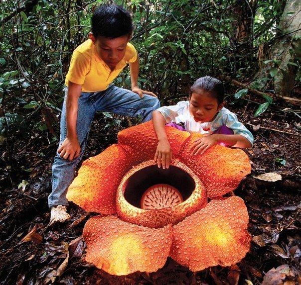331.jpg?resize=1200,630 - 10 plantas esquisitíssimas que nos fazem perguntar por que existem...