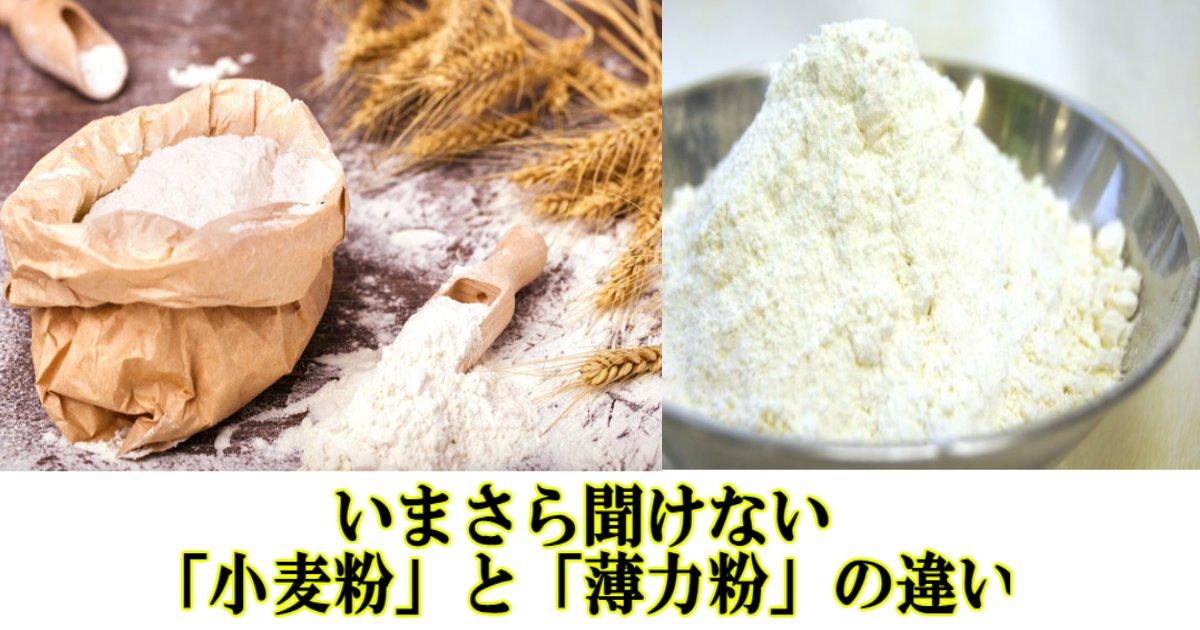4 79.jpg?resize=1200,630 - 【主婦必見】【料理上手への第一歩】いまさら聞けない「小麦粉」と「薄力粉」の違いって何?徹底解説!