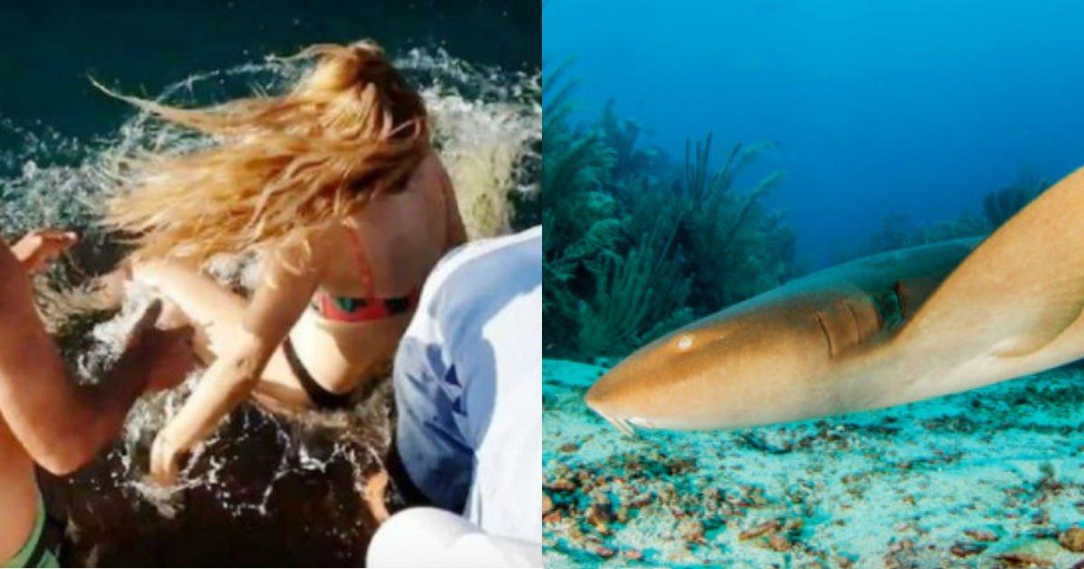 5b3b05dd14e6d273823d.jpg?resize=300,169 - '상어'에게 맨 손으로 먹이주다 '바다'로 끌려갈 뻔한 여성 (영상)