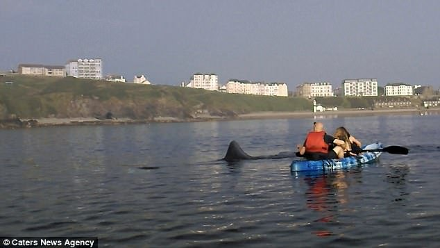 Gentle giant: Kayakers watched the beast circle for as long as two hours before it departed