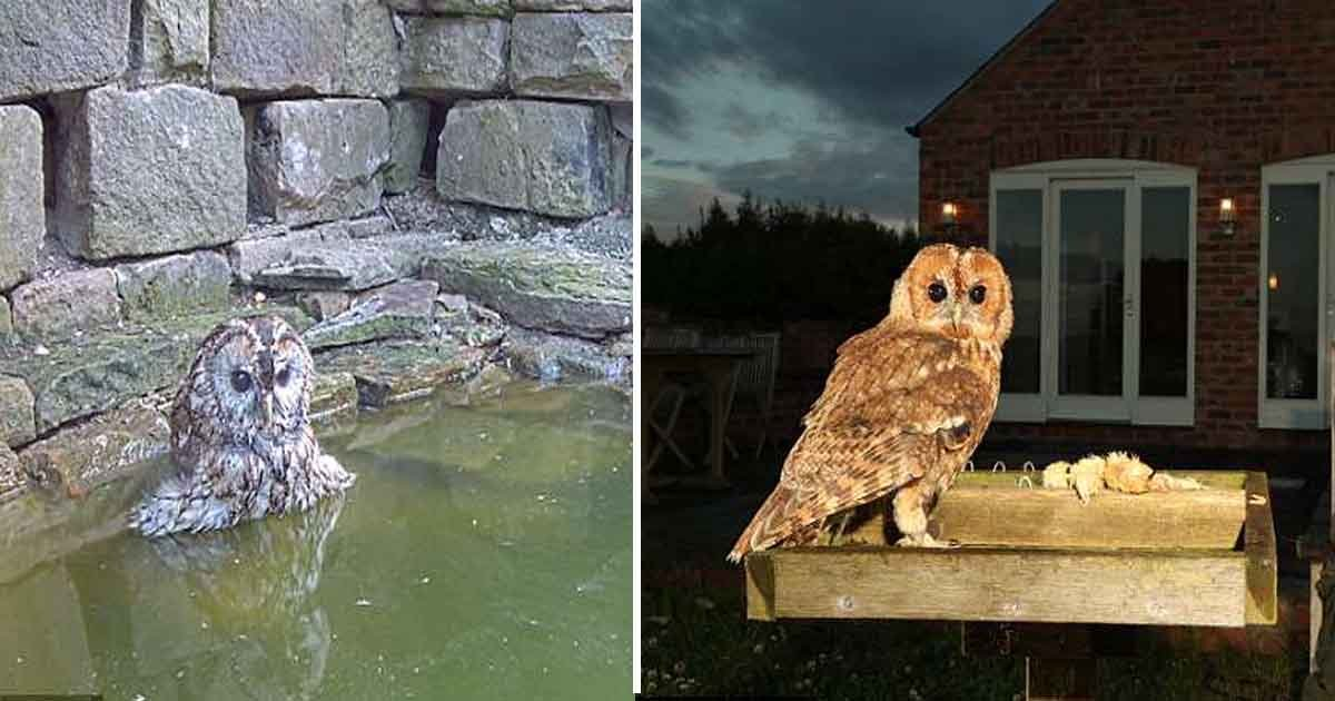 aaasd.jpg?resize=636,358 - Tawny Owl Captured Enjoying A Midday Bathing Session In The Sizzling Heat