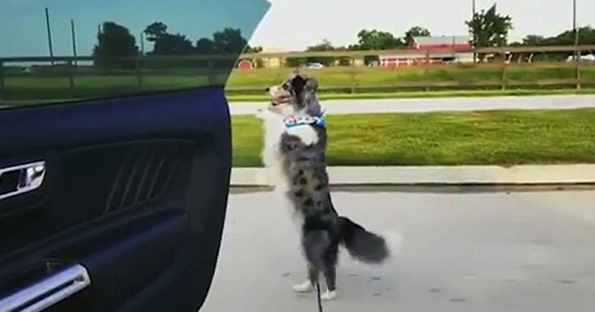 adaa.jpg?resize=412,232 - Supra The Dog Took The Kiki Challenge And Danced On The Scooter