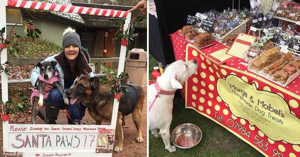 adfadf.jpg?resize=412,232 - Une ancienne infirmière de Nottingham, lance le premier hospice pour chiens en Grande-Bretagne et leur donne une bucket-liste avant qu'ils ne soient euthanasiés