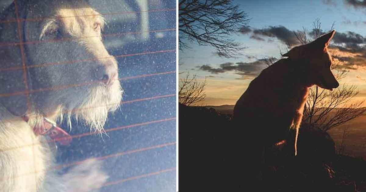 adsf.jpg?resize=300,169 - Ce chien en pleine santé meurt d'un coup de chaleur après une promenade en plein soleil en Grande-Bretagne