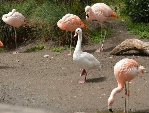 confused animals