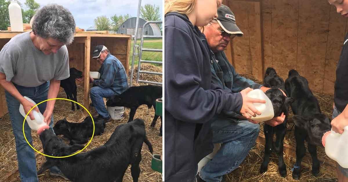 asdf 1.jpg?resize=300,169 - Le fermier pense que sa vache est enceinte, mais reste interloquée quand il voit le bébé