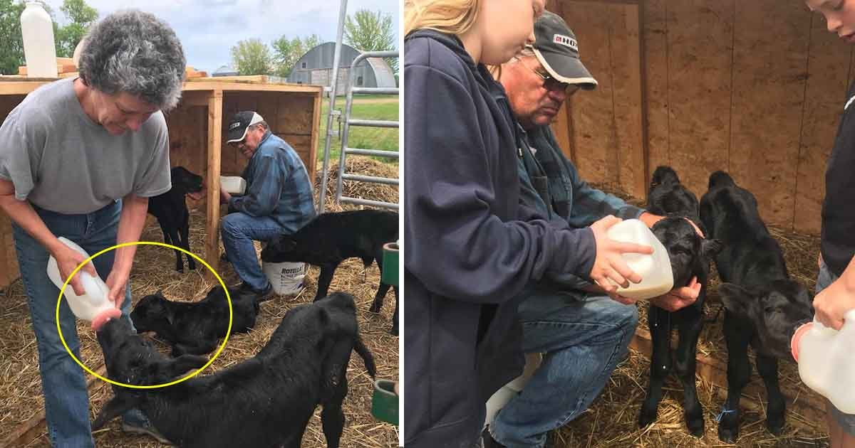 asdf 1.jpg?resize=648,365 - Le fermier pense que sa vache est enceinte, mais reste interloquée quand il voit le bébé