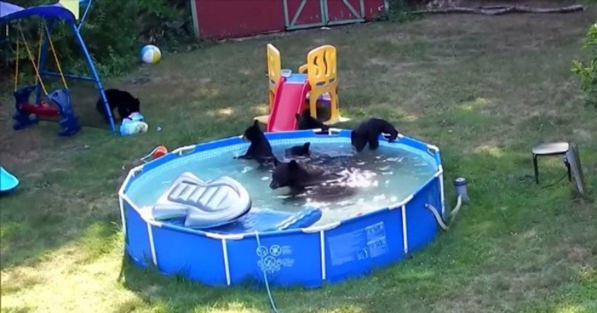 b1 3.jpg?resize=636,358 - [Vidéo] Une ourse noire et ses petits ont décidé de se rafraîchir dans la piscine de cette famille américaine.
