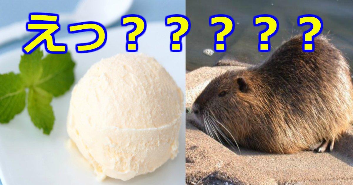 banira.png?resize=1200,630 - バニラアイスクリームの香りの成分はビーバーのお尻から抽出している?「朝アイス」がいいと言われている理由